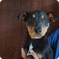 Adopt A Pet :: Galaxy - Oviedo, FL