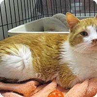 Adopt A Pet :: Jethro - Reeds Spring, MO