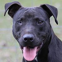Adopt A Pet :: Jack - Cedartown, GA