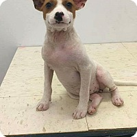 Adopt A Pet :: Smiley - Patterson, NY