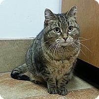 Adopt A Pet :: Pene - Cincinnati, OH