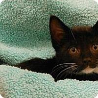 Adopt A Pet :: Alexander - Reston, VA