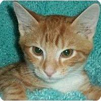 Adopt A Pet :: Ruby - Reston, VA