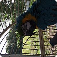 Adopt A Pet :: Birdie - Punta Gorda, FL