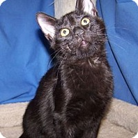 Adopt A Pet :: K-Alice3-Chachi - Colorado Springs, CO
