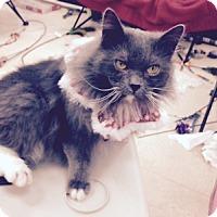 Adopt A Pet :: Thunder - Alexandria, VA