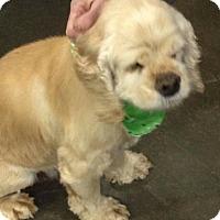 Adopt A Pet :: Vanna-Adoption Pending - Sacramento, CA