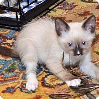 Adopt A Pet :: Lotus - Davis, CA