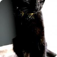 Adopt A Pet :: Tinkerbell - Princeton, MN