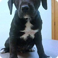 Adopt A Pet :: McGill - Kimberton, PA