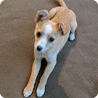 Adopt A Pet :: Delilah - Tucson, AZ