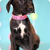 Adopt A Pet :: Junie - Waldorf, MD