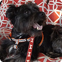 Adopt A Pet :: Telly - Memphis, TN