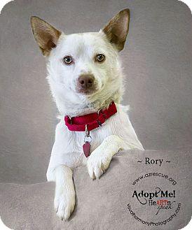 Cattle Dog Mix Dog for adoption in Phoenix, Arizona - Rory