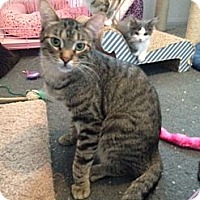 Adopt A Pet :: Oliver - Sterling Hgts, MI