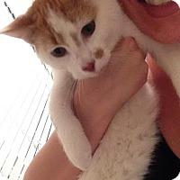 Adopt A Pet :: Duck Duck - McDonough, GA