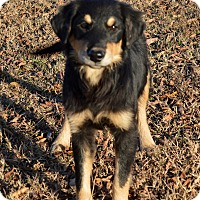 Adopt A Pet :: Holly - Westport, CT