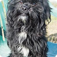 Adopt A Pet :: Binx - Patterson, CA