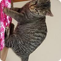 Adopt A Pet :: Henley - Americus, GA