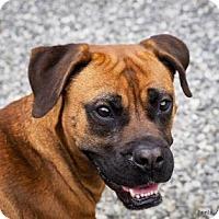Adopt A Pet :: Gypsy - Lincolnton, NC