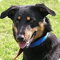 Adopt A Pet :: Crosby - Rigaud, QC