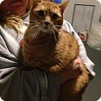 Adopt A Pet :: Cole&Phoe(declaed) - Clay, NY