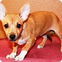 Adopt A Pet :: Malana - Gilbert, AZ
