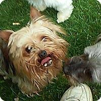 Adopt A Pet :: Jersey - Lorain, OH