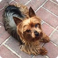 Adopt A Pet :: Mandy - Canton, IL