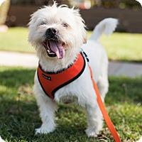 Adopt A Pet :: cole - West LA, CA