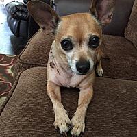 Adopt A Pet :: Ozzy - McDonough, GA