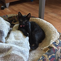 Adopt A Pet :: Jingles - Palmyra, NJ