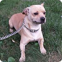 Adopt A Pet :: Chubs - Toledo, OH