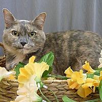Adopt A Pet :: Tessa - Pasadena, TX