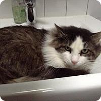Adopt A Pet :: Marlow *Courtesy* - New York, NY