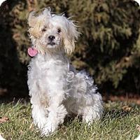 Adopt A Pet :: Starla - Ile-Perrot, QC