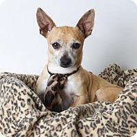 Adopt A Pet :: *MANFRED - Sacramento, CA