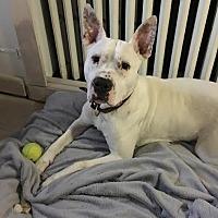 Adopt A Pet :: Nieva - Sayville, NY
