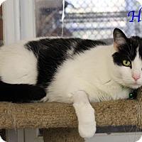 Adopt A Pet :: Hayes - Bradenton, FL