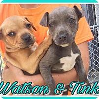 Adopt A Pet :: Watson - Brooksville, FL