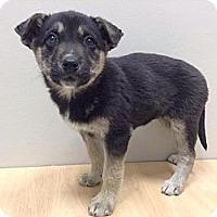 Adopt A Pet :: Amy - Saskatoon, SK
