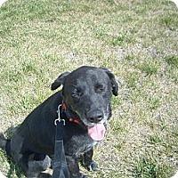 Adopt A Pet :: Judd - Windsor, MO