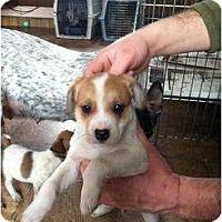 Adopt A Pet :: Dozer - New Boston, NH