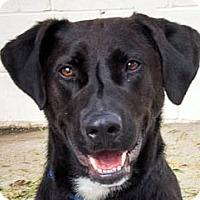 Adopt A Pet :: Jethro - Oakley, CA