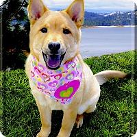 Adopt A Pet :: Callie therapy material - Sacramento, CA