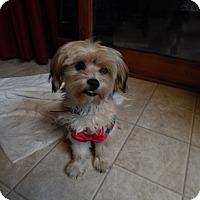 Adopt A Pet :: Cindy - West Deptford, NJ