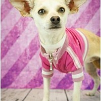 Adopt A Pet :: Sallie - Scottsdale, AZ