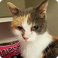 Adopt A Pet :: Natsuke - Grayslake, IL