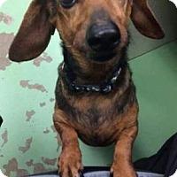 Adopt A Pet :: Hughey - Newport, KY