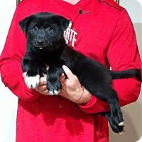 Adopt A Pet :: Moose - South Euclid, OH
